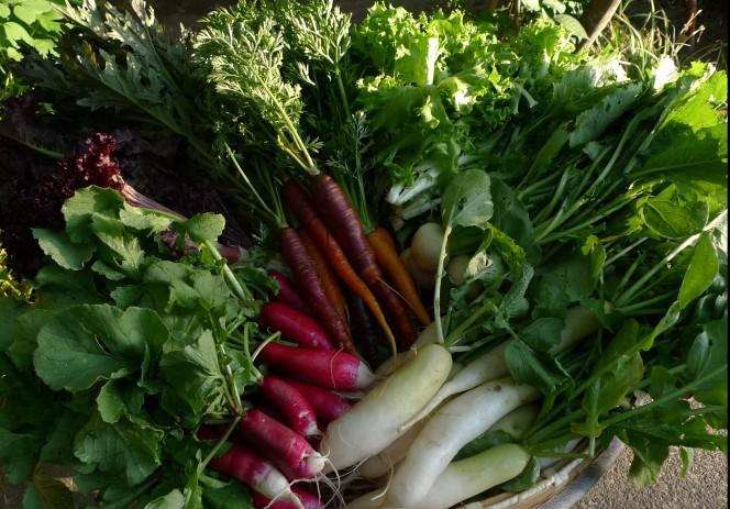 鈴木さん野菜2
